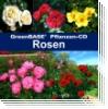 GreenBASE Pflanzen-CD Rosen